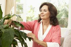 Senior Woman At Home Looking After Houseplant Stock Photos