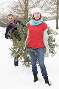 Senior Couple Carrying Christmas Tree In Snowy Landscape Stock Photos