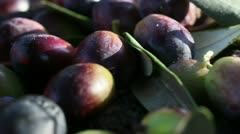 Olives harvesting in a field in Italy Stock Footage