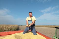 soy bean harvesting - stock photo