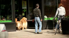 YOUNG COUPLE WINDOW SHOPPING WITH GOLDEN RETRIEVERS Stock Footage