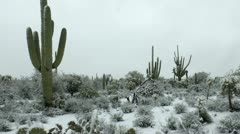 Snowing Arizona Desert Landscape Stock Footage