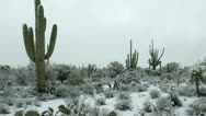 Stock Video Footage of Snowing Arizona Desert Landscape