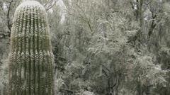 Snowing On Arizona Trees Cactus Stock Footage