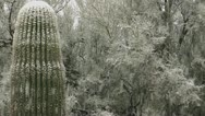 Stock Video Footage of Snowing On Arizona Trees Cactus