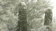 Stock Video Footage of Beautiful Arizona Desert Snowfall