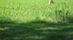 Children Running Through Farm Field - stock footage