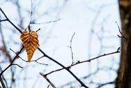 Winter leaf Stock Photos