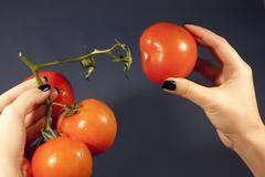 Pulling the tomatoe Stock Photos