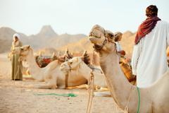 Beduiinit ja kameleita Kuvituskuvat