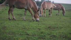 Three horses grazing Stock Footage