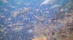 Hunting fish Stock Footage