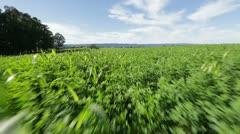 Running Through Green Field Stock Footage