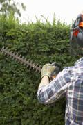 Stock Photo of Man trimming hedge