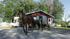 Horse Pulling Buggy Stock Footage
