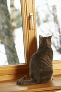 Cat Sitting On Window Ledge Looking At Snowy View Stock Photos