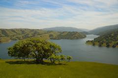 Single tree near large reservoir lake - stock photo