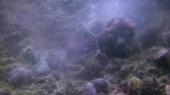 Clam spawning Shot 1 of 2 - stock footage