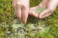 Replanting new grass seed Stock Photos