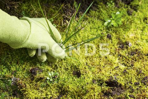 Stock photo of removing grass weed moss garden