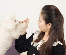 women and poodle - stock photo