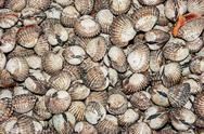 Stock Photo of pile of seashells background