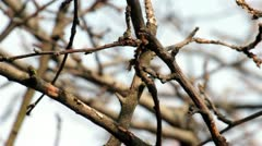 Bare Branches - stock footage