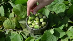 Hand pick take hazel nutwood nuts from metallic dish Stock Footage