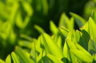 Stock Photo of fresh green grass (shallow dof)