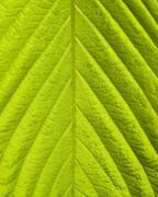 Green leaf macro shot Stock Photos