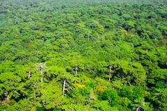 aerial view of a green mountain forest - stock photo