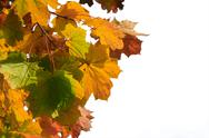 Stock Photo of autumn leaves isolated