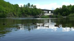 Canards Stock Footage