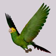 double yellow amazon parrot - stock illustration