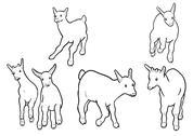 Goatling Stock Illustration