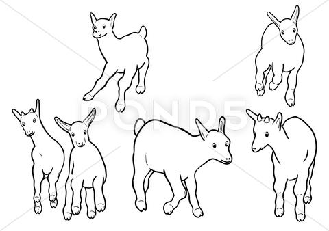 Stock Illustration of goatling