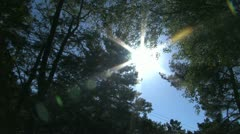 Dolly forest into sunshine - stock footage