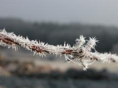 Frosted Barbwire - stock photo