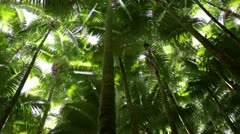 Palm Forest Treetops - pan - stock footage