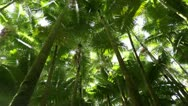 Stock Video Footage of Loop: Palm Forest Treetops - pan