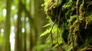 Stock Video Footage of Loop: Mossy bank with ferns in jungle forest