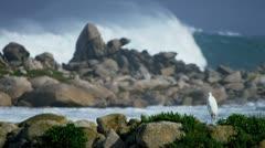 Sea Bird Rocky Coastline Pounding Surf - stock footage