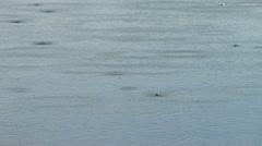 Raindrop Splashes on Rippling Lake Water Stock Footage