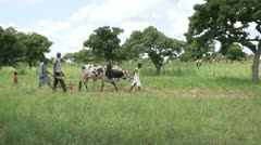 Burkina Faso: Plowing the Field by Hand Stock Footage