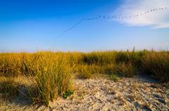 Stock Photo of wild beach landscape