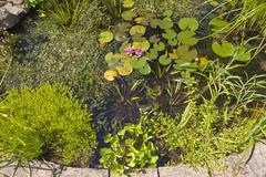 Garden pond and aquatic plants Stock Photos