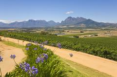 Vineyards and mountains, stellenbosch, south africa Stock Photos