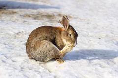 little rabbit - stock photo