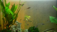 Stock Video Footage of aquarium fishes