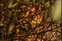 Florida Wildfires - 1998 - stock footage